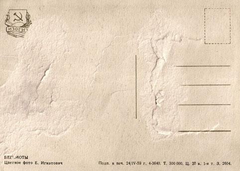 Почтовая открытка «Бегемоты» - 1959г., СССР