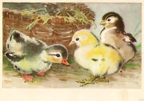 Почтовая открытка «Цыплята и утенок» - 1974г., СССР