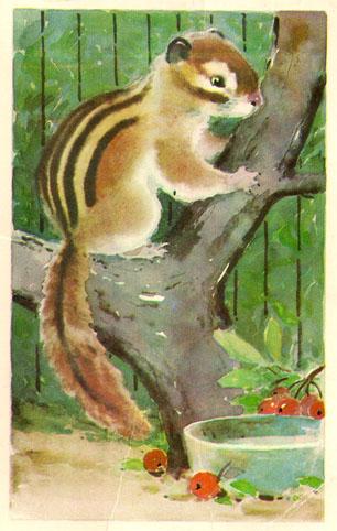 Почтовая открытка «Бурундучок» - 1974г., СССР