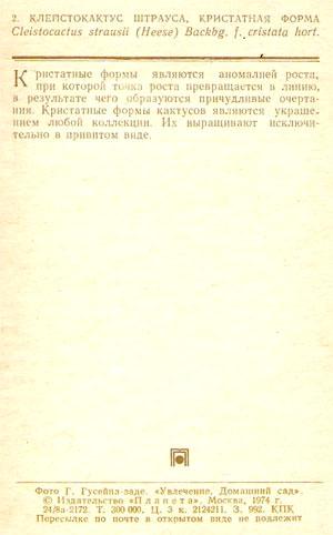 Почтовая открытка «Клейстокактус Штрауса, кристатная форма» - 1974г., СССР