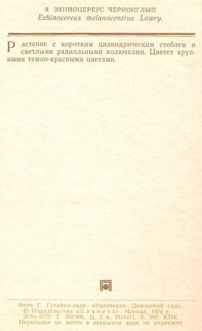 Почтовая открытка «Эхиноцереус черноиглый» - 1974г., СССР
