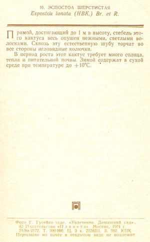 Почтовая открытка «Эспостоа шерстистая» - 1974г., СССР