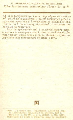 Почтовая открытка «Эхинофоссулокактус пятииглый» - 1974г., СССР