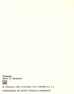 Почтовая открытка «Гепарды» - 1988г., СССР