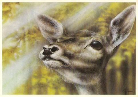 Почтовая открытка «Оленуха» - 1989г., СССР