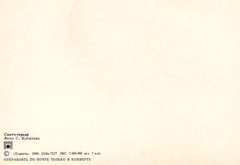 Почтовая открытка «Скотч-терьер» - 1989г., СССР