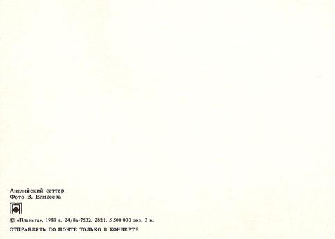 Почтовая открытка «Английский сеттер» - 1989г., СССР