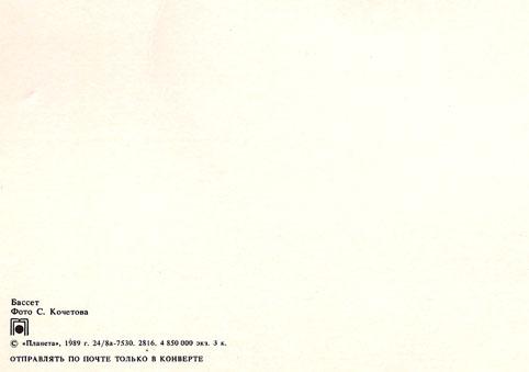Почтовая открытка «Бассет» - 1989г., СССР